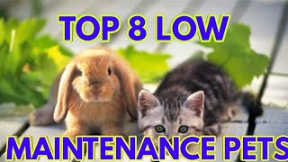 TOP 8 LOW MAINTENANCE PETS