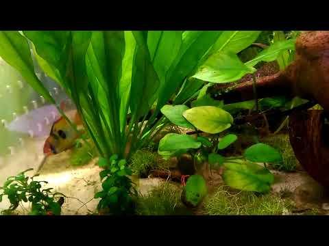Akwarium Roślinne I Ziemia Ogrodowa Moim Okiem Linkyoutubeme