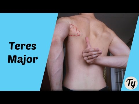 Nakatschka des Schultermuskels - Welche schnellste Weise die Muskeln ...