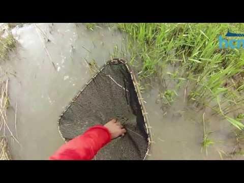 Psarorema Electrofishing