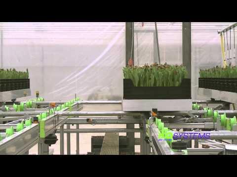 Tulip cultivation systems / Tulpen teeltsystemen