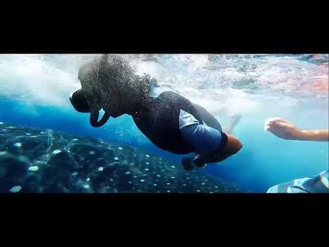 Whale Shark Experience – Holbox Island