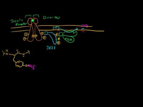 Insulin Receptor Activation and Resistance