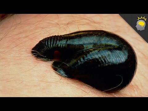 Kung paano kilalanin ang bulating parasito sa lalake