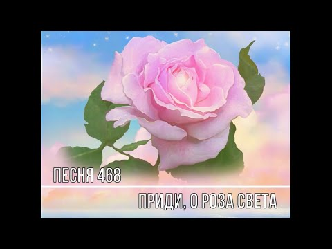 Песня 465 Роза Света