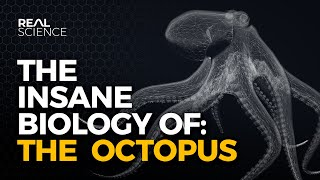 The Octopus Video