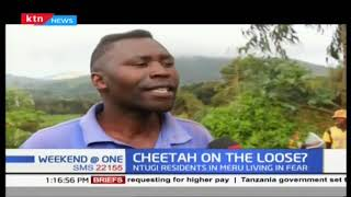 CHEETAH ON THE LOOSE : Residents in Meru living in fear