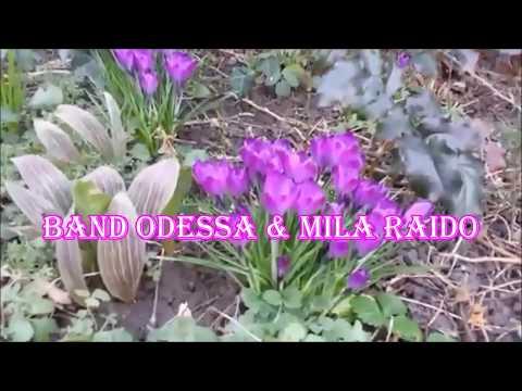 Band ODESSA & Mila Raido  ☀ ЛЮБОВЬ ЗАПРЕТНАЯ ☀ Russian LOVE Song