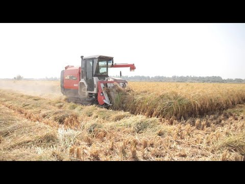 Reviving the Basmati Rice Farming Industry in Pakistan