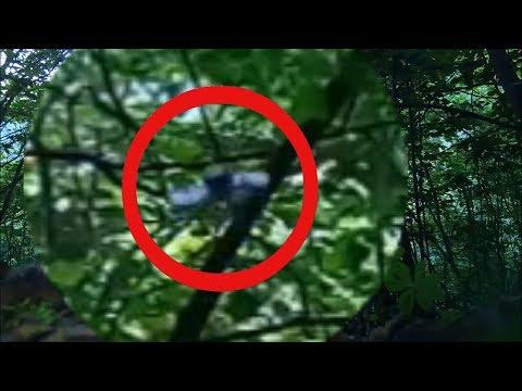 UFO 2019 real. НЛО попало в кадр видео в лесу. летающая тарелка нло 2019. неопознанное
