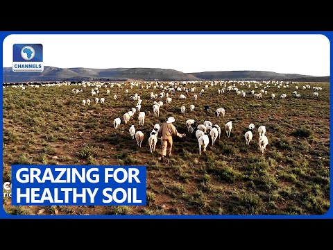 , title : 'How Sheep Farming Makes Soil Healthier In South Africa