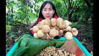 Theo Cô Hiền ra tận vườn hái Bòn Bon - Hương vị đồng quê - Bến Tre - Miền Tây