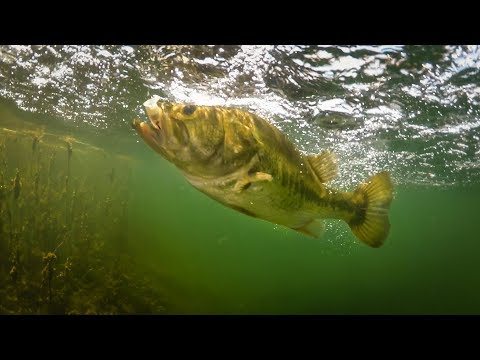 Insane Underwater Footage Bass Eating Jerkbaits Fishing Tips