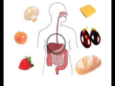 Wie die Analyse auf die Parasiten im Organismus des Menschen heißt