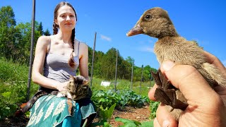 New Ducklings and Going on a Garden Tour