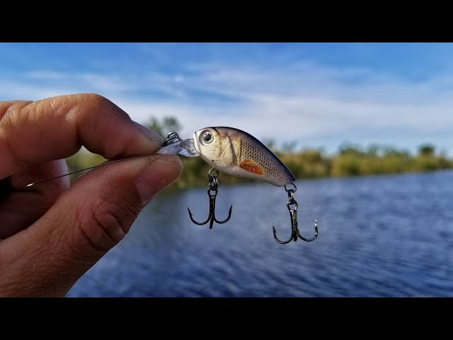 Tiny Lure Challenge!! Micro Crankbait Catches Tons Of Fish!
