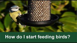 Bird Bites - How to start feeding the wild birds in your garden