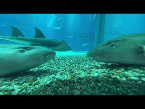 【海遊館】「太平洋」水槽の底