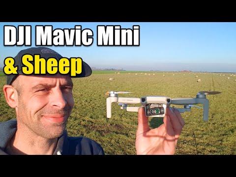 , title : 'DJI Mavic Mini Herding Sheeps