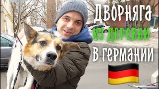 Дворняга из Сибири улетела в Германию.