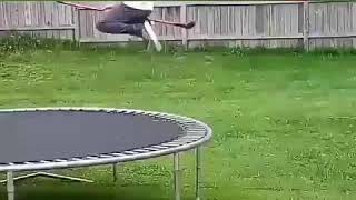 Летящий на метле