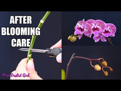 , title : 'Orchid Care for Beginners - What to do after Phalaenopsis blooms fall? Cutting spike & aftercare