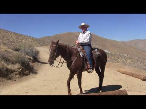 , title : 'The Art of the Bridle Horse - Trailer