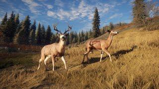 Mysliwy: Zew Dzikosci (Hunter Call of the Wild)-gry komputerowe