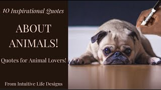 ANIMALS QUOTES | 10 Inspirational Quotes About Animals
