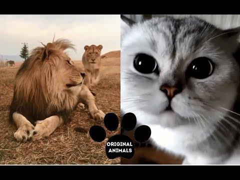 Original Animals #3. CUTE AND FUNNY ANIMALS VIDEO/ МИЛЫЕ И СМЕШНЫЕ ЖИВОТНЫЕ.