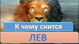 К чему снится Лев видео -К чему снится лев (львенок)