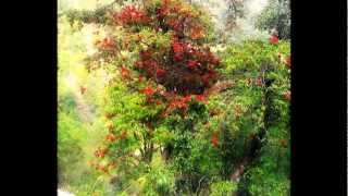 preview picture of video 'Hike to Chandragiri'