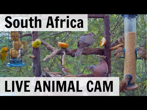 LIVE Animals and Birds! - South Africa (Hornbills, Bushbaby, and Genets)
