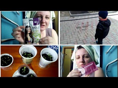 Пикирование Петунии/ Уход за волосами/ Прогулка/ Ремонт/