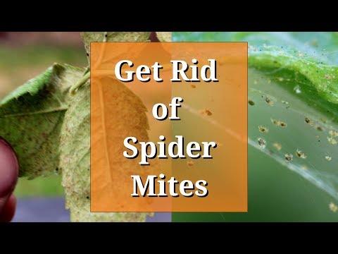 , title : 'Get Rid of Spider Mites