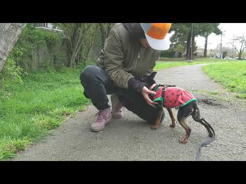 Dog Walker Education and Certification - YouTube
