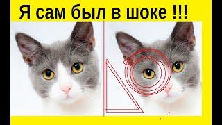 10 фактов о кошках, после которых вы полюбите их еще сильнее!