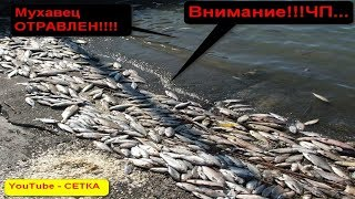 ЧП-Мухавец,Пружаны,отравленная река!!! ЧАСТЬ 1я.