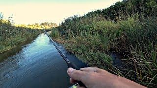 Речка по колено, Сколько тут ГОЛОДНЫХ РТОВ?! Рыбалка на спиннинг.