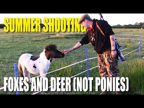 Summer Shooting: foxes, deer (not ponies)