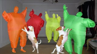 Dogs Get Epic Dance Party Surprise! Funny Dogs Maymo & Potpie Dancing w/Men in Chub Suits