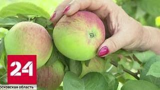 Опытные садоводы развеивают яблочные мифы