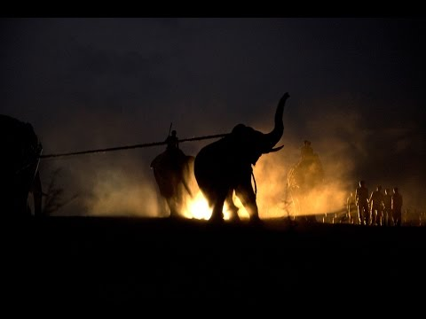 This chilling footage shows you what it takes to capture a wild elephant in India