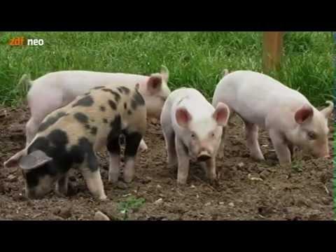 Die Massage bei walgusse der Füsse bei grudnitschka Video
