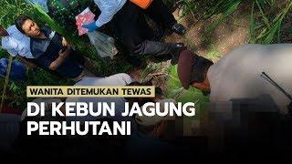 Wanita Ditemukan Tewas di Kebun Jagung Perhutani Ngawi, Ada Bekas Cekikan di Leher