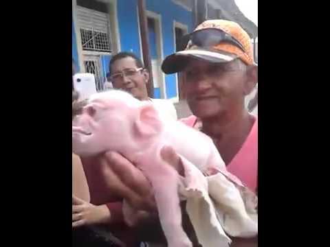 一頭母豬生下一窩小豬,看到其中一頭小豬的長相時,主人徹底