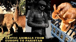 Unboxing of Exotic Animals from Europe  to Pakistan