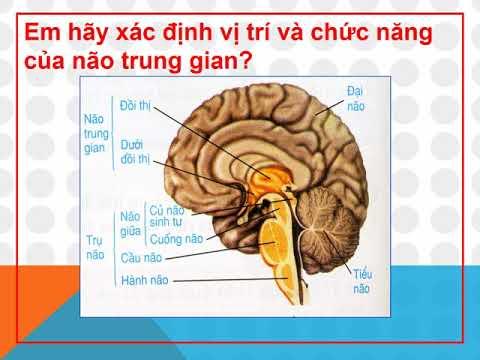 sinh8- Bai 46 Tru nao Tieu nao Nao trung gian