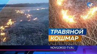 Добровольцы вместе с пожарными спасали от огня Новгородский район