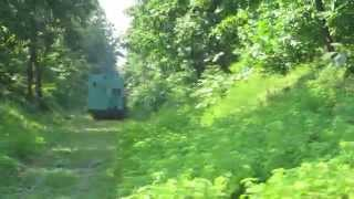 Green Train Through Dense Green Forest